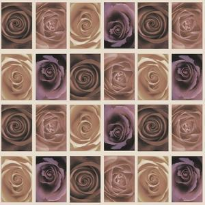 Roses by Maria Trad