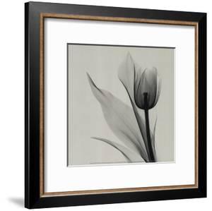 Tulip by Marianne Haas