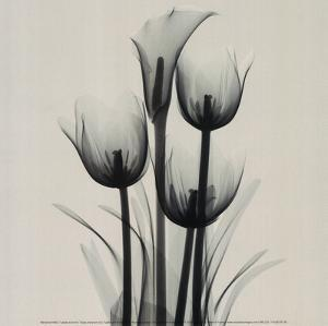 Tulips and Arum Lily by Marianne Haas