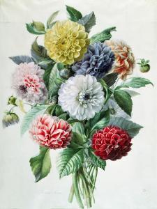 Dahlia by Marie-Anne