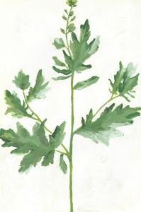 Leafy Greens on White 1 by Marie Lawyer