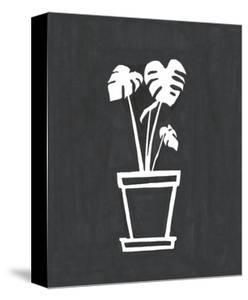 Philodendron by Marie Lawyer