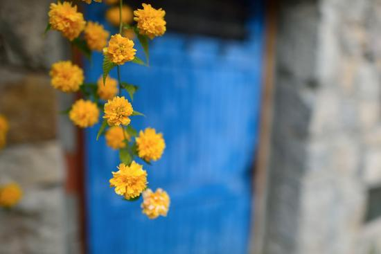 Marigolds Hang in Front of the Blue Door of a Stone Building-Keith Ladzinski-Photographic Print