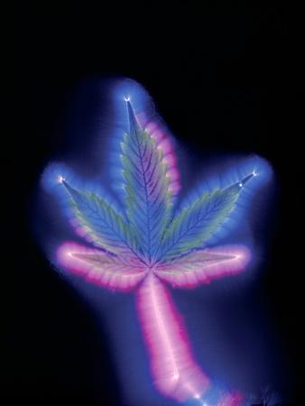 https://imgc.artprintimages.com/img/print/marijuana-leaf-kirlian-photograph_u-l-pzfaf70.jpg?p=0
