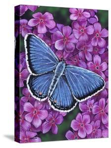 Eastern Tailed Blue by Marilyn Barkhouse