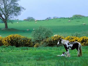 Irish Colt and Mother, County Cork, Ireland by Marilyn Parver
