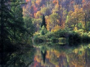 Reflection of Fall Foliage by Marilyn Parver