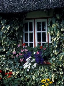 Thatched Cottage with White Window, Adare, Limerick, Ireland by Marilyn Parver