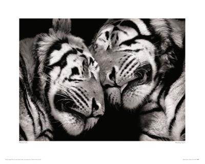 Sleeping Tigers by Marina Cano