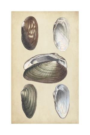 https://imgc.artprintimages.com/img/print/marine-bivalves-i_u-l-q12znvl0.jpg?p=0