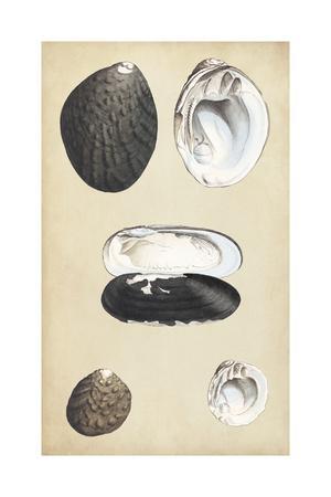 https://imgc.artprintimages.com/img/print/marine-bivalves-ii_u-l-q12zoel0.jpg?p=0
