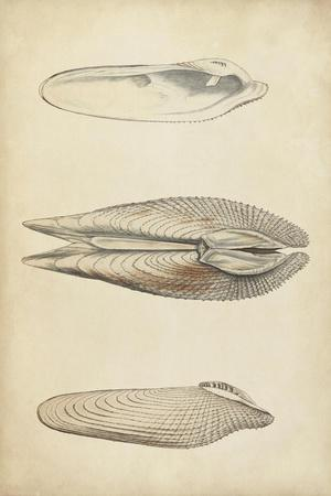 https://imgc.artprintimages.com/img/print/marine-mollusk-i_u-l-q11k0z20.jpg?p=0