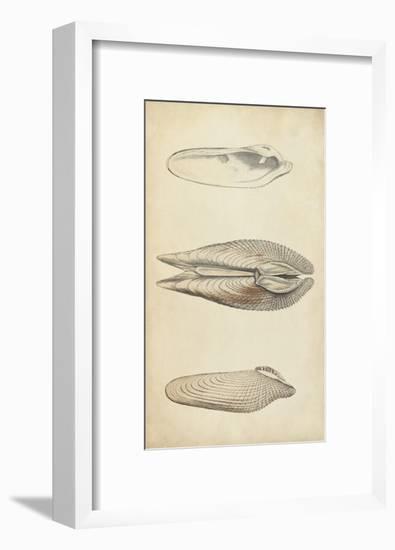 Marine Mollusk I-Wood-Framed Art Print