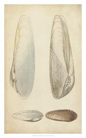 https://imgc.artprintimages.com/img/print/marine-mollusk-ii_u-l-f8hsf60.jpg?p=0