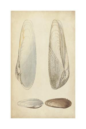 https://imgc.artprintimages.com/img/print/marine-mollusk-ii_u-l-q11k0tq0.jpg?p=0