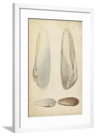 Marine Mollusk II-Wood-Framed Art Print