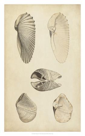 https://imgc.artprintimages.com/img/print/marine-mollusk-iii_u-l-f8hsf70.jpg?p=0