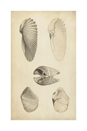 https://imgc.artprintimages.com/img/print/marine-mollusk-iii_u-l-q11k0v60.jpg?p=0