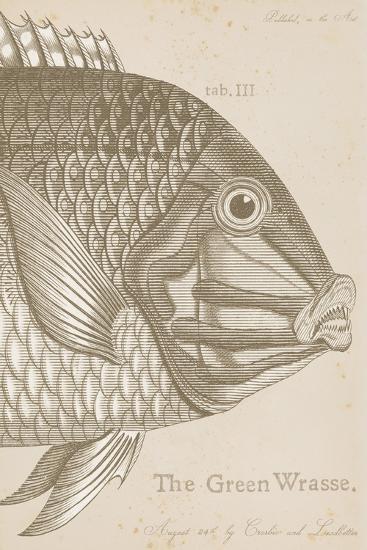 Marine Studies I-Maria Mendez-Giclee Print