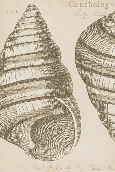 Marine Studies III-Maria Mendez-Giclee Print