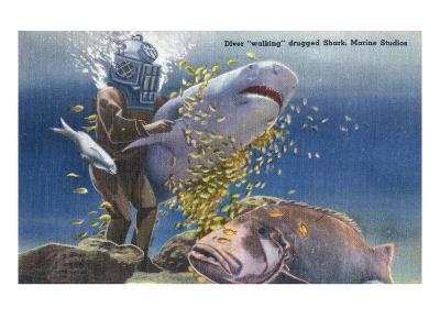Marineland, Florida - Diver Moving Drugged Shark at Marine Studios-Lantern Press-Art Print
