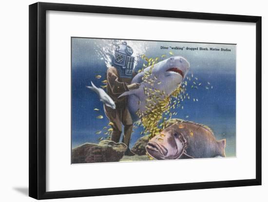 Marineland, Florida - Diver Moving Drugged Shark at Marine Studios-Lantern Press-Framed Art Print