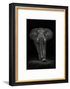 Ngorongoro Bull by Mario Moreno