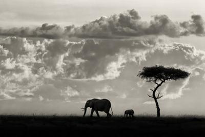 Silhouettes of Mara by Mario Moreno