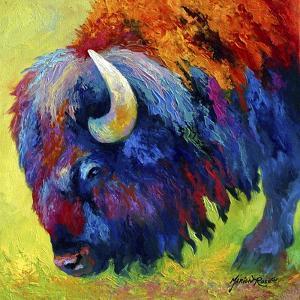 Bison Portrait II by Marion Rose
