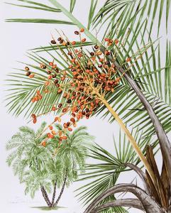 Pheonix Palm by Marion Sheehan