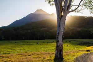 Mt Barney, Mt Barney National Park, Queensland, Australia by Mark A Johnson