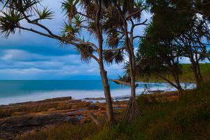 Pandanus trees at dusk, Noosa, Sunshine Coast, Queensland, Australia by Mark A Johnson