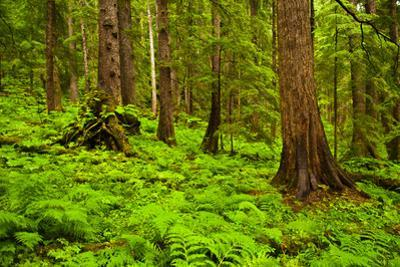 Tongass National Forest, Alaska by Mark A Johnson
