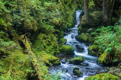 Tongass National Forest, Sitka, Alaska, USA by Mark A Johnson