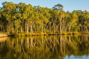 Trees reflected in the Noosa River, Cooloola National Park, Queensland, Australia by Mark A Johnson