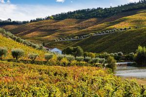 Vineyards in the Douro Valley, Portugal by Mark A Johnson