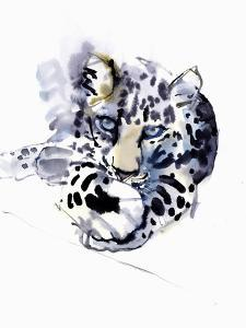 Arabian Leopard, 2008 by Mark Adlington