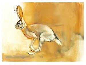 Cape Hare, 2010 by Mark Adlington