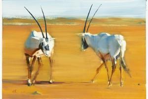 Circling Arabian Oryx, 2010 by Mark Adlington