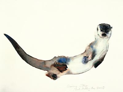 Curious Otter, 2003