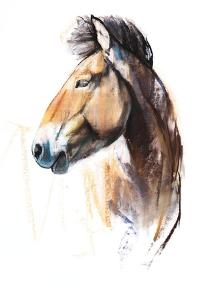 Desert Spirit (Przewalski), 2013 by Mark Adlington