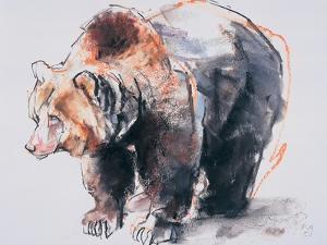 European Brown Bear, 2001 by Mark Adlington