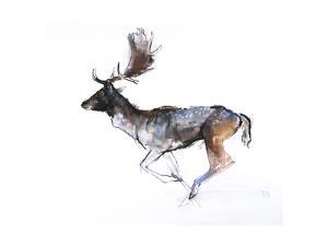 Evening Buck (Fallow Deer), 2007 by Mark Adlington