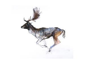Evening Buck (Fallow Deer), 2007 by Mark Adlington