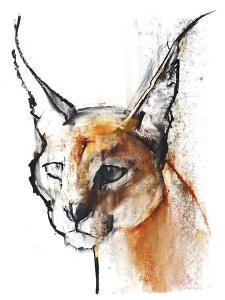 Feline (Arabian Caracal), 2009 by Mark Adlington