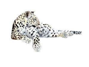 Long (Arabian Leopard), 2015 by Mark Adlington