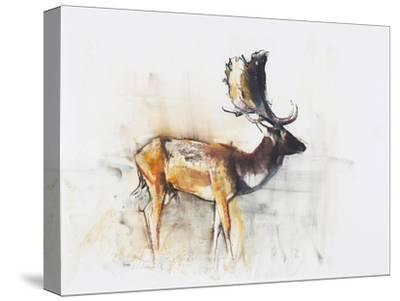 Magnificent Fallow Buck, 2006