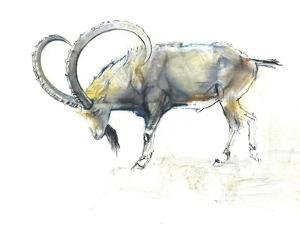 Nubian Ibex, 2008 by Mark Adlington