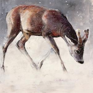 Roe Buck, Winter, 2000 by Mark Adlington