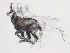 Running Chamois by Mark Adlington